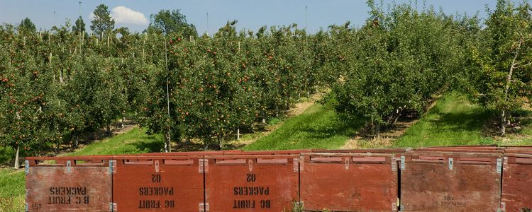 BC Tree Fruits Cooperative Announces Closure of Osoyoos Facility